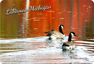 Geese in the Fall
